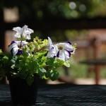 giardino_bb_maria_paola (14)