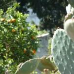 giardino_bb_maria_paola (16)
