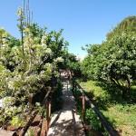 giardino_bb_maria_paola (5)